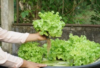 Is an Aquaponics System Right for You?