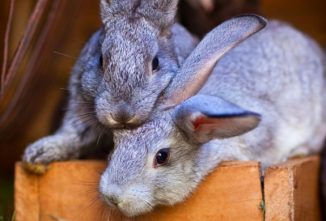A Guide to the Best Feed for Rabbits