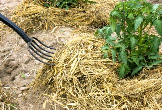 The Benefits of Deep Mulch Gardening