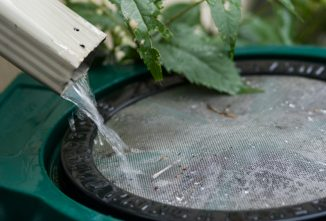 Rain Water Harvesting: It's a Good Idea (Even if You Have Running Water)