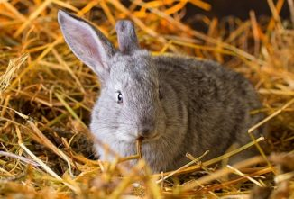 5 Meat Rabbit Facts to Know Before You Buy