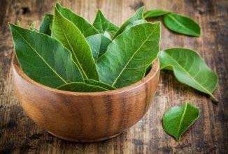 Reap Bay Leaf Benefits in Teas, Oils, Foods
